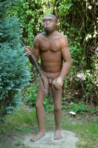 Homo Erectus, thought to be the first of our ancestors to migrate out of Africa...or was he? (Photo by Frank Vincentz)